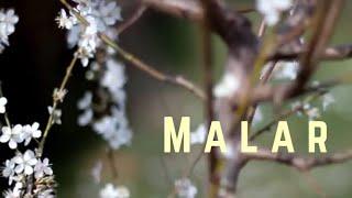 Gambar cover Malar - Malayalam Lyric Video  | G M Satish | Sneha Symon | Vishnu|Vishal Suresh,Vinoth|Arjun #malar