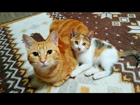 保護した子猫・10日目におきた奇跡-Miracle happened on the day10.The kitten which I rescued.【Uzu&Nene channel】