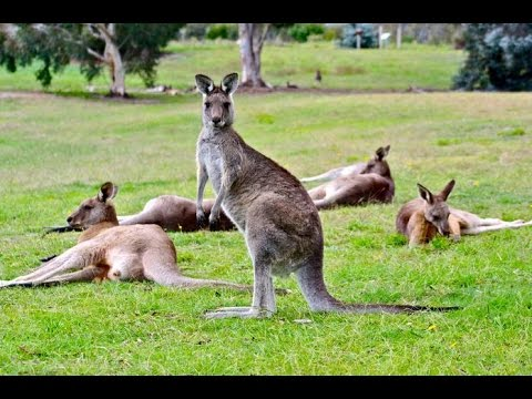 National Zoo & Aquarium - Privately owned by Canberra ...