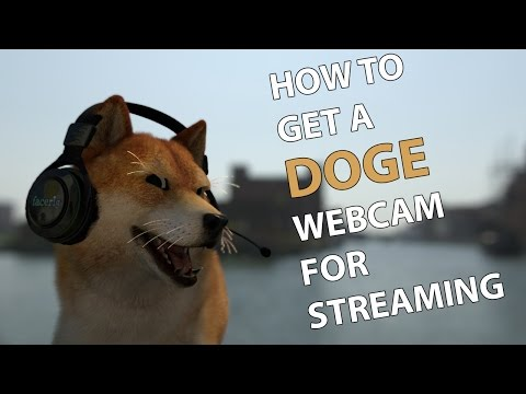 How To Get A Doge Webcam For Streaming