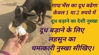 गाय/भैंस का दूध बढेगा केवल 1 या 2 रुपये में,दूध बड़ाने के लिए लहसुन का चमत्कारी नुस्खा सीखिए।