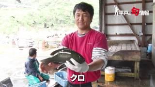 6/9 平戸の魚の旬情報.