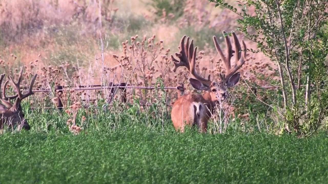Utah's Biggest Bucks