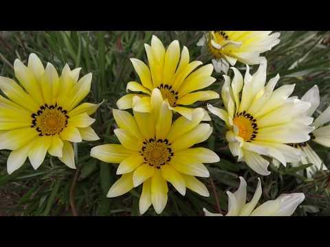 BEAUTIFUL COLORED FLOWERS wallpaper hd full screen thumbnail