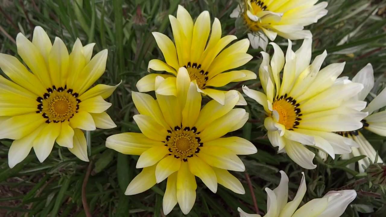 Flower Wallpaper Hd Full Screen Wajiflower Co