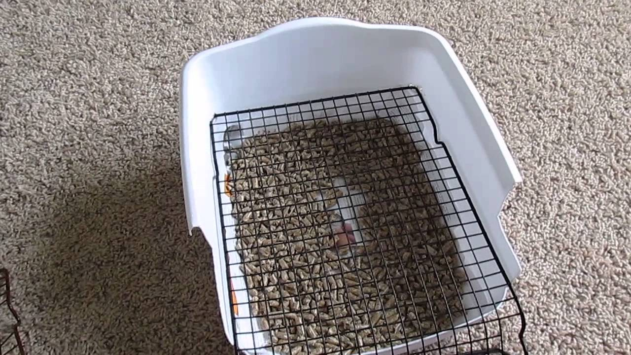 Rabbit litter box-Custom-made/ DIY Scatterless with grid/grate under $5 - YouTube & Rabbit litter box-Custom-made/ DIY Scatterless with grid/grate ... Aboutintivar.Com
