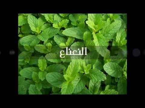 Arab Organization For Alternative Medicine - 06