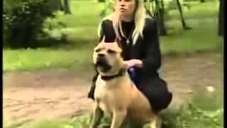 Собаки убийцы  питы, стафы и були  Рассказ о смертоносных собаках