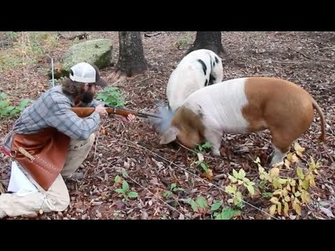 How to Humanely Harvest a Pig with Hand Hewn Farm