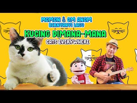 Download LAGU KUCING DIMANA-MANA l MOMON
