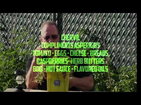 Chervil Herbal Firepower