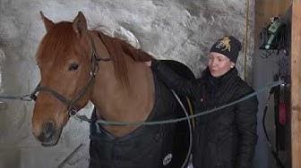 Hevosen jalkojen kylmäys
