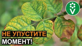 СРОЧНО ПОЛЕЙТЕ ЭТИМ РАСТЕНИЯ, если увидели такие листья!