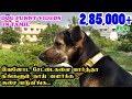 இவனோட சேட்டைகளை பார்த்தா நீங்களும் நாய் வளர்க்க ஆசை படுவீங்க. | Funny Dog Videos in Tamil