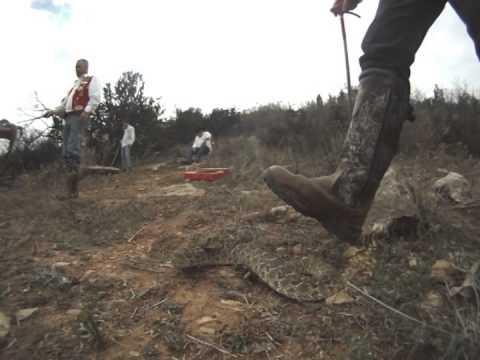 Sweetwater Texas 2013 Rattlesnake Roundup