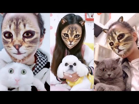 Cat and Dog Reaction to Cat Filter – Funny Cats & Dogs with Cat Filter