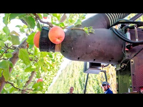 Robotic apple picker trials continue in Washington
