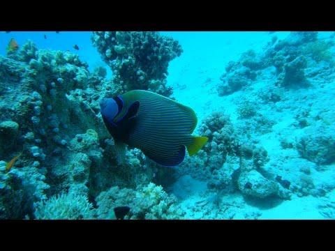 Красное море под водой 2013 FullHD - Red Sea Underwater