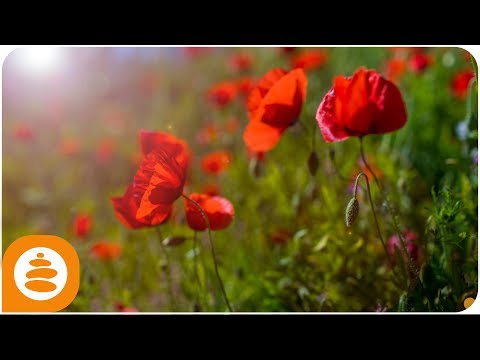 Yoga Music Relax: Relaxing Music Piano, Beautiful Landscapes 4k – 0031