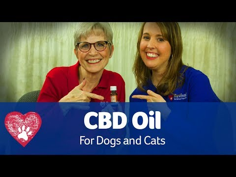 CBD Oil for Pets - The Paw Squad Post - Revival Animal Health