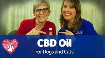 CBD Oil for Pets: Pet Care Pro Show