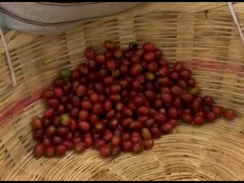 CONDICIONES DEL CAFÉ EN EL SALVADOR