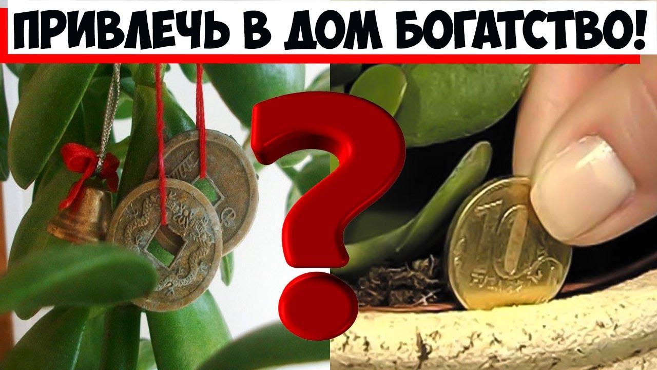 Где поставить толстянку, привлечь в дом богатство, и для правильного развития комнатного растения!