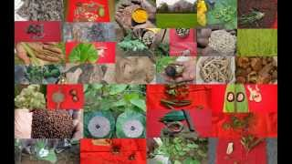 Tribal Medicines of Gandhamardan Hills for Vaginal Fistulas: Film by Pankaj Oudhia