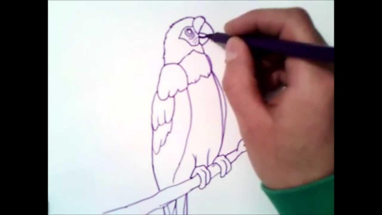 Como Desenhar Uma Arara Passo A Passo Como Desenhar Uma Arara