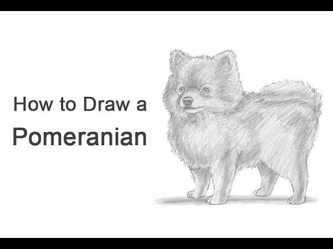 how to draw a dog pomeranian