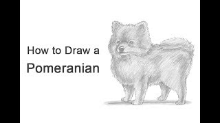 How to Draw a Dog (Pomeranian)