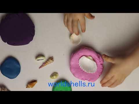 Как играть с морскими ракушками