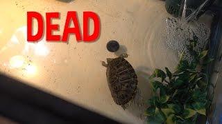 RIP Skrt The Turtle