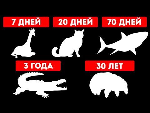 Как долго животные могут прожить без еды