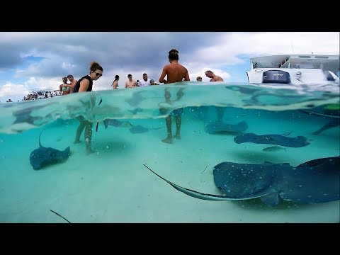 Grand Cayman - Stingray City Sandbar. GoPro HD