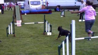 Dog Vegas Rottweiler Agility - 24th September 2011