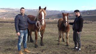 In vizita la Sebi de la Tritenii Hotar, Cluj cu Marius si Andrei de la Turda2019