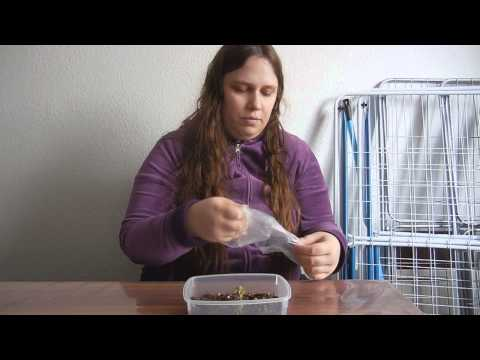 alinasvlog - my plants #02 (new Bryophyllum)