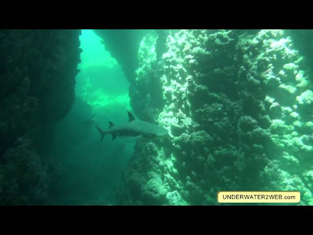 Sharks At Tunnels Reef - Underwater2web.com