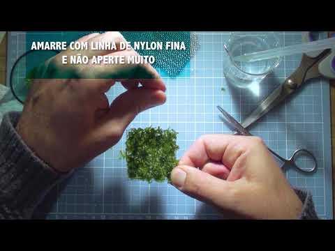 Plantando musgos em tela inox