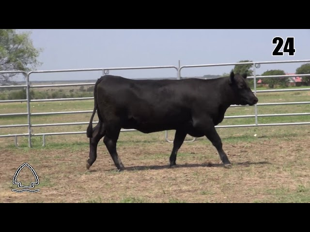 Pearcy Angus Ranch Lot 24