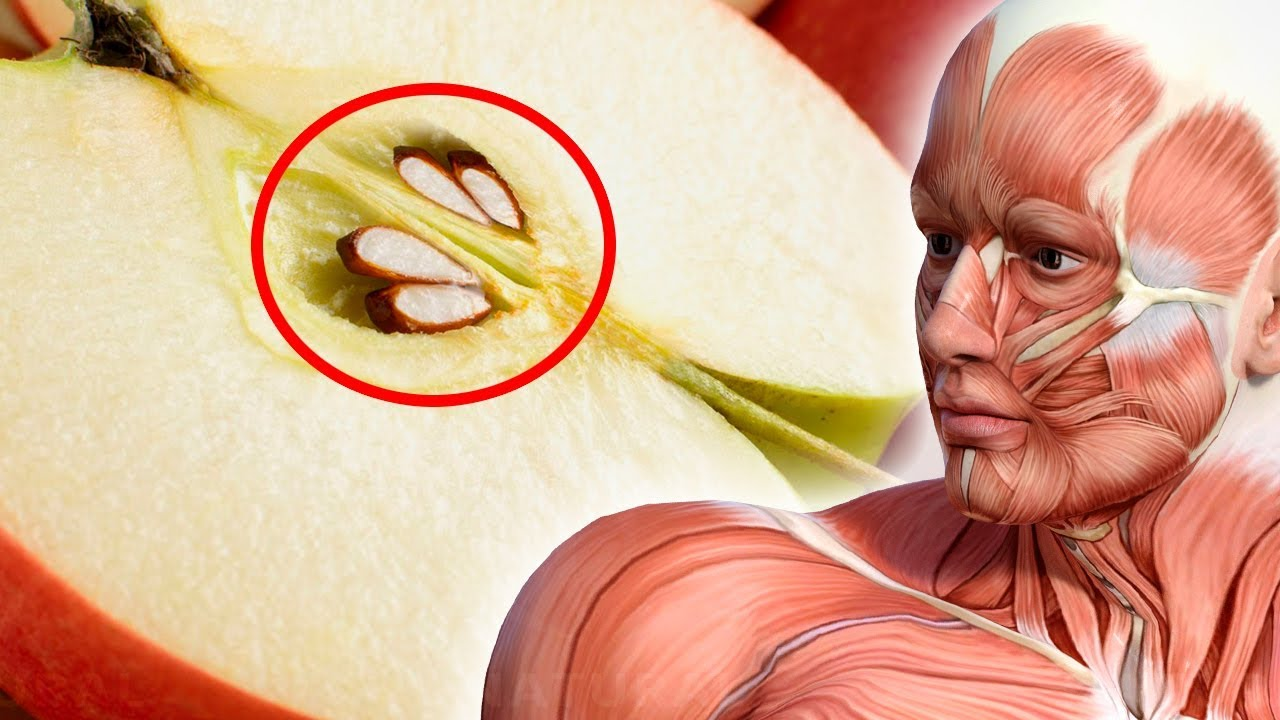 Here's What Happens When You Eat Apple Seeds