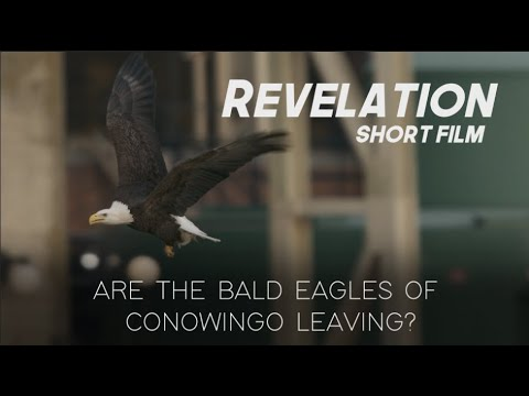 """Revelation: Are the Bald Eagles of Conowingo Leaving? "" (Short Film)"