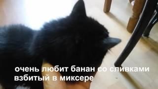 20 лет коту! Наш Чарлик.