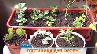 В Перми появилась первая в городе гостиница для растений(Забота и внимание - растениям. В Перми появилась первая в городе гостиница для зеленых питомцев. Как мы уже..., 2016-07-06T10:32:22.000Z)