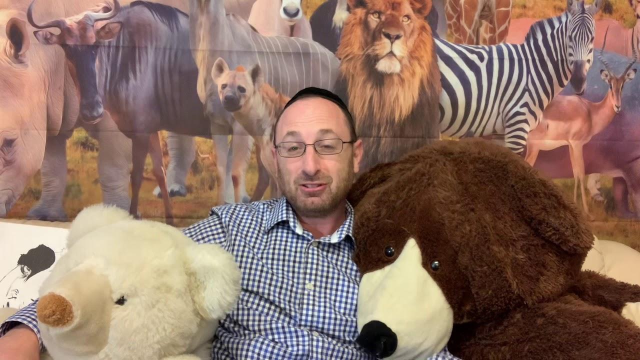 Animal Torah: Bear Edition