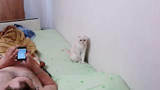 Российская кошка