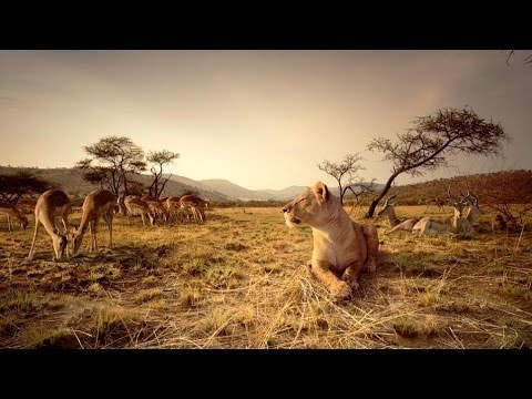 Nat Geo WIld Wildlife of AFRICA Documentary HD