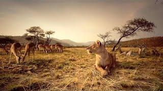Nat Geo WIld Wildlife of AFRICA Documentary HD