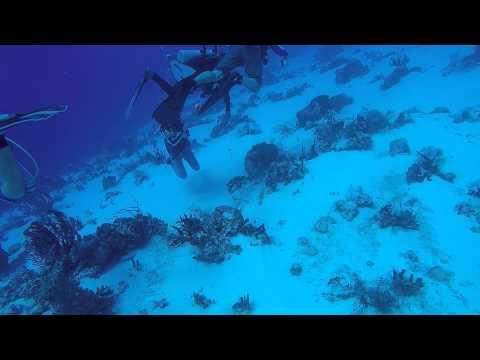 POV Diving - Las Palmas - Cozumel - México